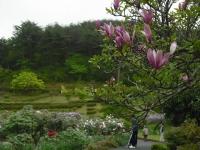 花と泉の公園2017-05-14牡丹園119