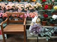 花と泉の公園2017-05-14ベゴニア館131