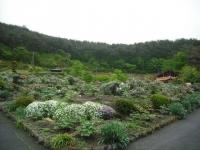 花と泉の公園2017-05-14牡丹園131