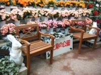 花と泉の公園2017-05-14ベゴニア館134