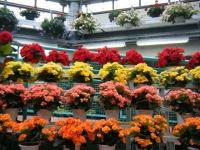 花と泉の公園2017-05-14ベゴニア館133