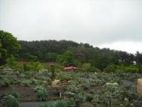花と泉の公園2017-05-14牡丹園139