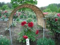 花と泉の公園2017-05-14牡丹園155