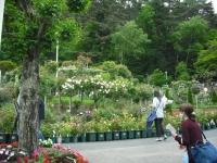 2017-06-11花巻温泉のバラ園004