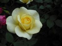 2017-06-11花巻温泉のバラ園007