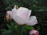 2017-06-11花巻温泉のバラ園036