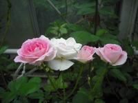 2017-06-11花巻温泉のバラ園037