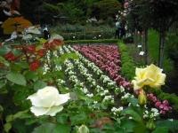 2017-06-11花巻温泉のバラ園063