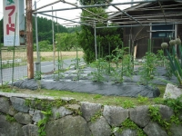 2017-06-19重箱石04