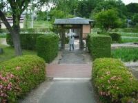 2017-06-17登米市南方花菖蒲の郷006