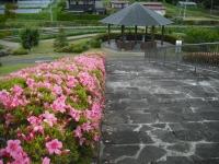 2017-06-17登米市南方花菖蒲の郷004
