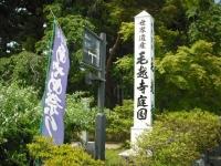 2017-06-24平泉・毛越寺あやめ祭り004