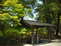 2017-06-24平泉・毛越寺あやめ祭り016