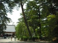 2017-06-24平泉・毛越寺あやめ祭り019