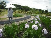 2017-06-17登米市南方花菖蒲の郷035 (2)