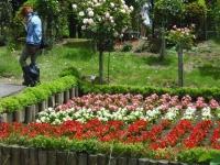 2017-06-11花巻温泉のバラ園077