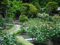 2017-06-11花巻温泉のバラ園082