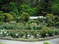 2017-06-11花巻温泉のバラ園079