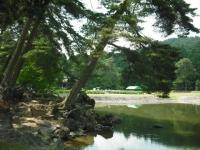 2017-06-24平泉・毛越寺あやめ祭り042