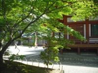 2017-06-24平泉・毛越寺あやめ祭り041