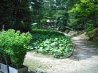2017-06-24平泉・毛越寺あやめ祭り048