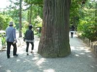 2017-06-24平泉・毛越寺あやめ祭り047