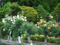 2017-06-11花巻温泉のバラ園092