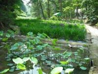 2017-06-24平泉・毛越寺あやめ祭り052