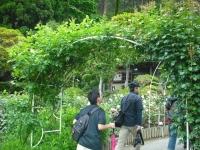 2017-06-11花巻温泉のバラ園099