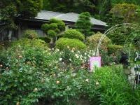 2017-06-11花巻温泉のバラ園104
