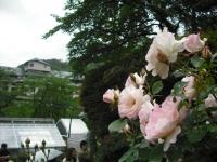 2017-06-11花巻温泉のバラ園103