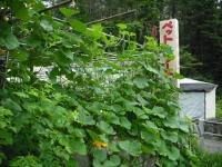 2017-07-20重箱石04