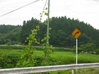 2017-07-22重箱石02