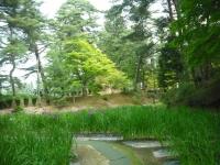 2017-06-24平泉・毛越寺あやめ祭り070