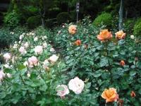 2017-06-11花巻温泉のバラ園110