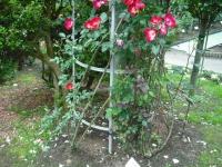 2017-06-11花巻温泉のバラ園120