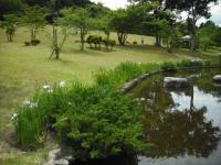 2017-06-17登米市南方花菖蒲の郷074