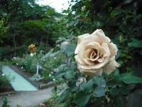 2017-06-11花巻温泉のバラ園123