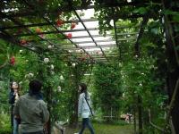 2017-06-11花巻温泉のバラ園125