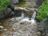2017-06-17登米市南方花菖蒲の郷094