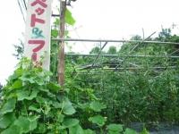 2017-07-31重箱石04