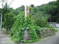 2017-08-04しろぷーうさぎ02
