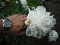 2017-06-11花巻温泉のバラ園137