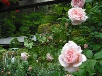 2017-06-11花巻温泉のバラ園134
