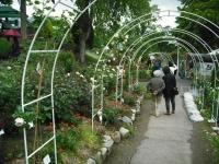 2017-06-11花巻温泉のバラ園142