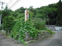 2017-08-05しろぷーうさぎ02