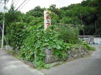 2017-08-06しろぷーうさぎ02