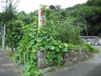 2017-08-07しろぷーうさぎ03