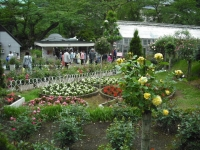 2017-06-11花巻温泉のバラ園156