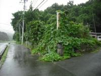 2017-08-13しろぷーうさぎ03